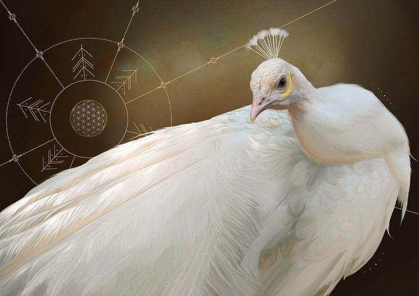 Witte pauw van Nettsch .