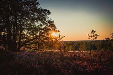 Schafherde auf der Heide von Stedom Fotografie
