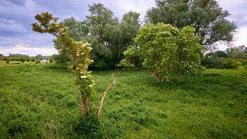 Bloeiende meiboom in de uiterwaarden van Jenco van Zalk