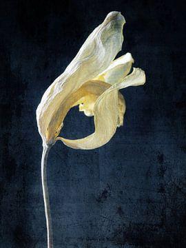 Zarte Schönheit in gelb von Andreas Berheide Photography