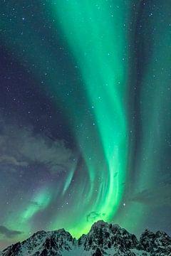 Nordlichter, die von den schneebedeckten Bergspitzen der Lofoten in Nordnorwegen aufsteigen von Sjoerd van der Wal