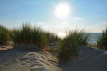 Nordsee Dünen auf Zeeland von