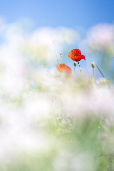 Flowers too... van Bob Daalder