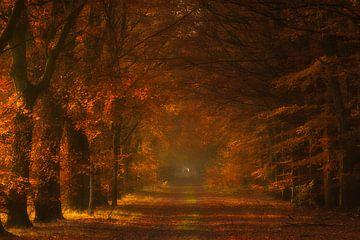 Herbstglühen - Gasselte, Drenthe, Die Niederlande von Bas Meelker