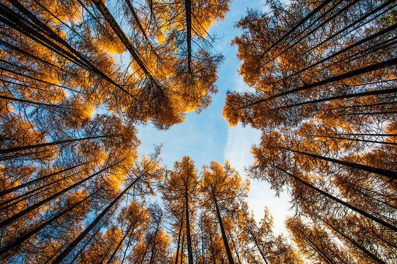 Fall (Steensel, The Netherlands) van Michel van Rossum