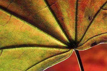 Herfst,  een mooi jaargetijde maar zo kort. van Wim Bodewes