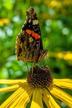 Vlinder op bloem von Natasja Martijn