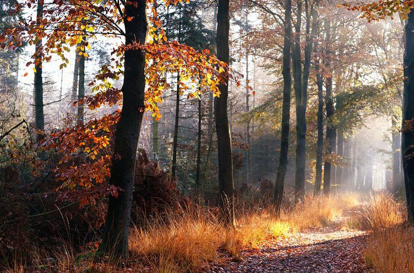 In the woods van Olha Rohulya
