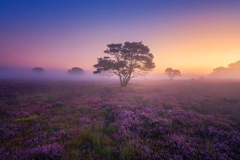 Paarse Heide Hilversum van Albert Dros