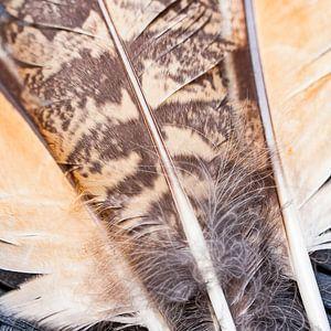 Plumes de hibou sur 2BHAPPY4EVER.com photography & digital art