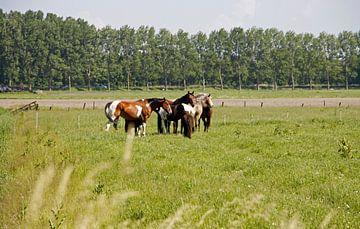 Paarden in de wei van Cora Unk