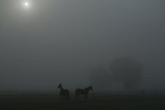 Paarden in mistig weiland met doorbrekende zon