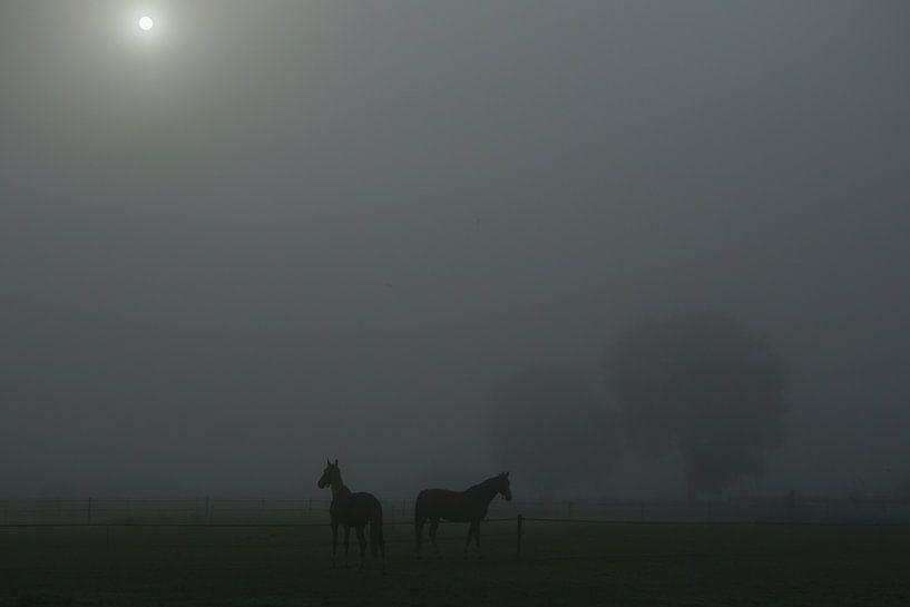 Paarden in mistig weiland met doorbrekende zon van Karin in't Hout