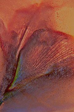 Amaryllis abstrait sur Leo Luijten