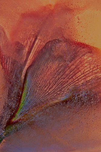 Geabstraheerde Amaryllis