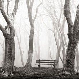 A Misty View van Lars van de Goor