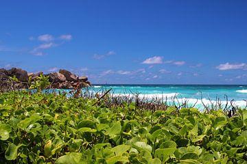 La Dique, Seychellen von GoWildGoNaturepictures