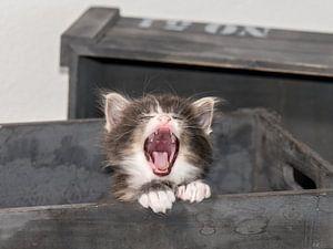 Kitten serie IV