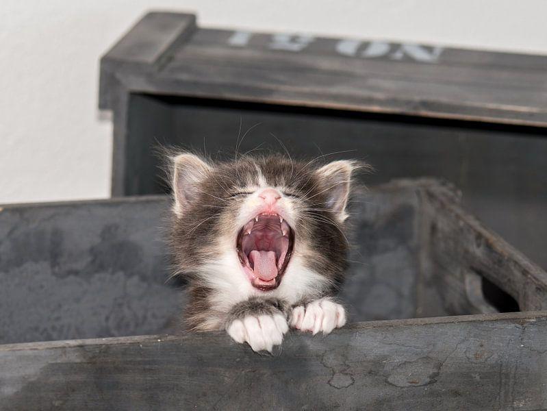 Kitty serie IV von Rob Smit