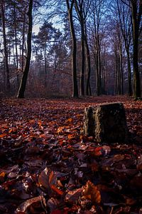 De eenzame boomstronk