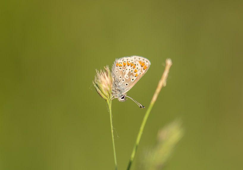 vlinder van Tania Perneel