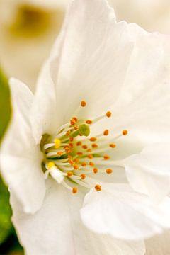 bloem van Frank Broenink