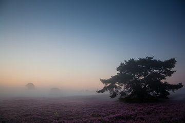 Heidelandschap met mist van Evelyne Renske