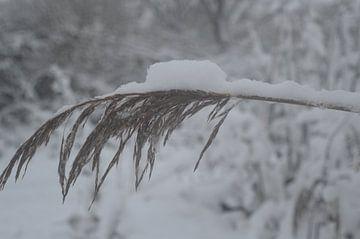 Schnee auf einem Zweig von Inge Schoonenberg