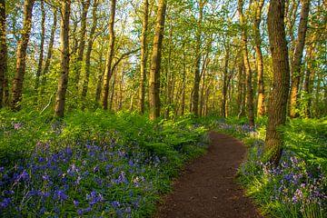 Fußweg durch den Wald von Margreet Frowijn