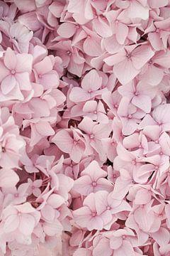 Pastel Roze Hortensia Bloesem van Henrike Schenk