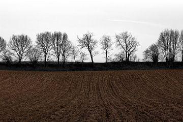 Limburgse akker van Arno Photo