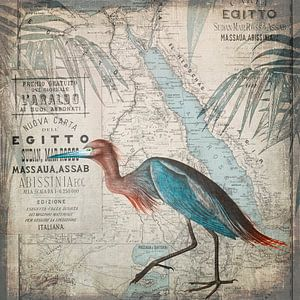 Egypt Heron