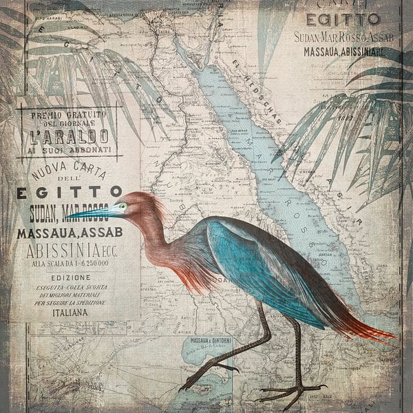 Egypt Heron van Andrea Haase