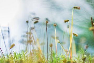 Wunderkervenmoos von Martzen Fotografie