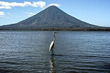 Concepción met vogel van Stefan Havadi-Nagy