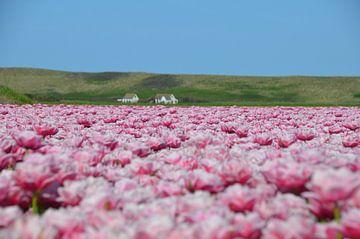 Tulpenveld van Corinna Vollertsen