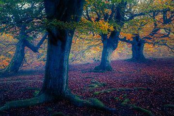Mirkwood van Joris Pannemans - Loris Photography