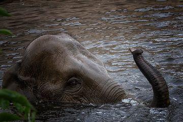 olifant van Wendy Hilven