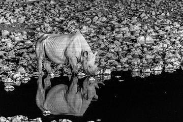 Nashorn am Wasserloch sur Felix Brönnimann