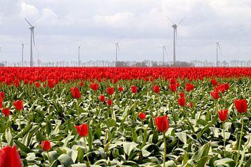 Rood tulpenveld met windmolens von Frouwkje Fotografie