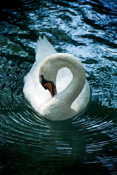 Swan riple sur Mariska Hofman