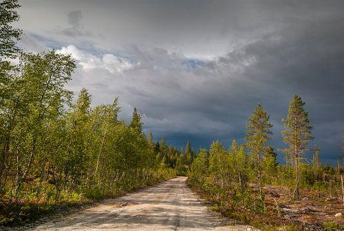 Bosweggetje Idre, regio Dalarna in Midden-Zweden van