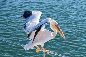 Pelikan-Lift auf unserem Boot von Merijn Loch