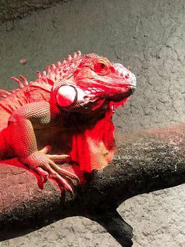 Reptil 3 von tania mol