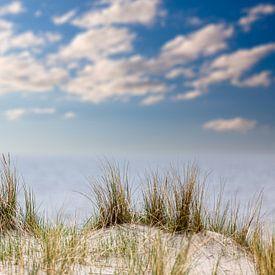Strandhafer an der Ostsee von Tilo Grellmann | Photography
