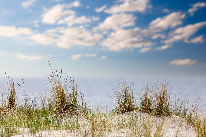 Herbe de plage à la mer Baltique sur Tilo Grellmann | Photography