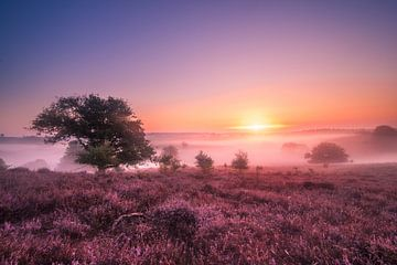 Sonnenaufgang auf der Posbank von Niels Barto