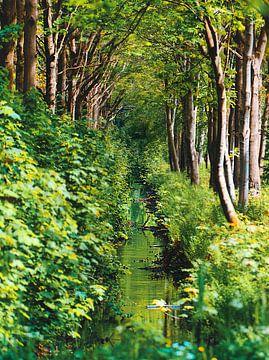 Ein Waldweg von Wendy Tellier - Vastenhouw