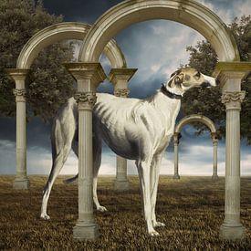 The Greyhound van Marja van den Hurk