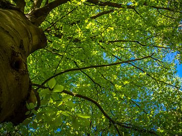 Feuilles vertes d'un arbre